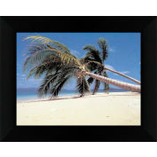 "Crystal Art Gallery - Palm Trees - 24""W x 20""H, Straight Fit Framed"